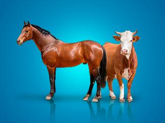 Cavalo-e-boi-fundo-azul.png