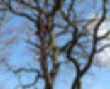 tree-surgery-wide.jpg