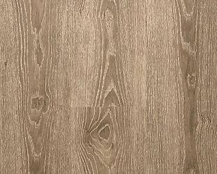 Oyster Oak.jpg