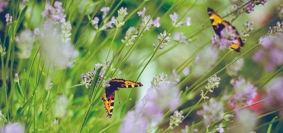butterfly-img.jpg
