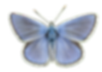butterfly-3.png