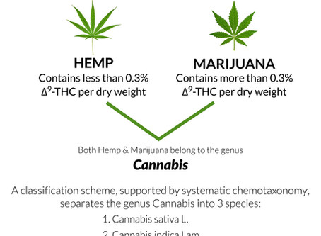 The Cannabis Confusion Debunked