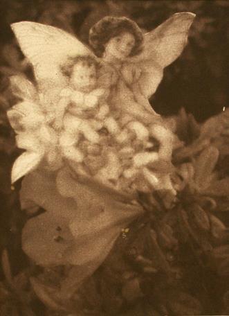 Série Fairies 8