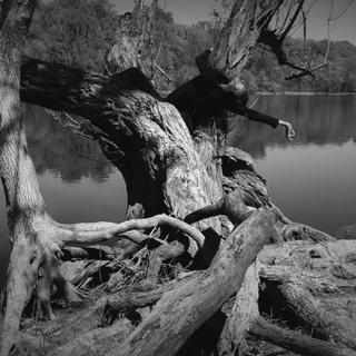 Listening Tree by Darren Johnson