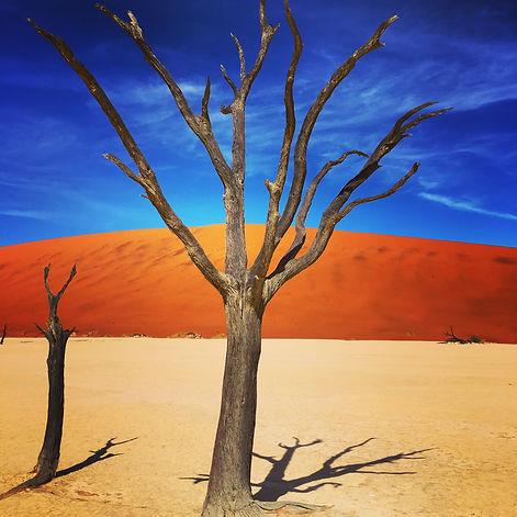 dead-tree-by-red-desert-sand-dune-sossus