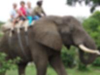 Balade à dos d'éléphant