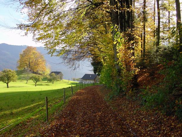 Waldweg.png
