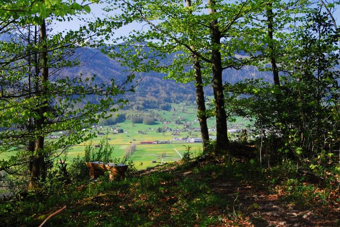 Blick aus Wald.jpg