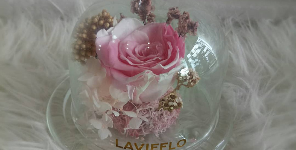 LL108-CUTE PINK ROSE