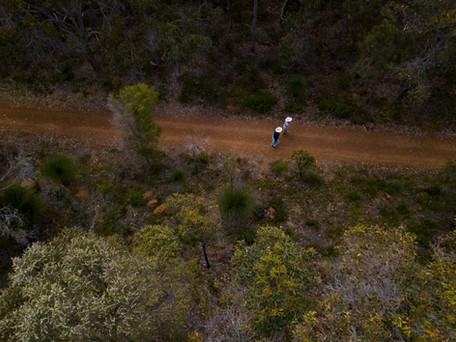 Walk the Wadandi Track.JPG
