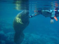 The Swim of a Lifetime!
