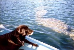 Dog Manatee Boat Tour