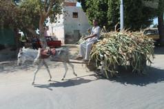 donkey and cart