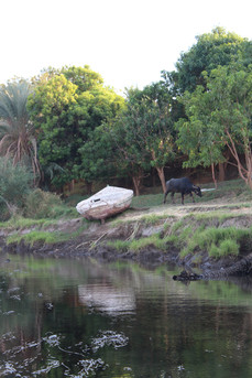 boat and water buffalo on the nile