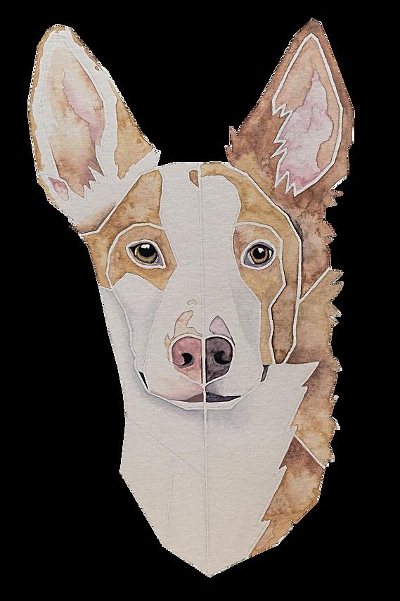 Ein Hundeportrait nach Fotovorlage von zwei Podencos