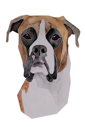 Ein Hundeportrait nach Fotovorlage von einem Boxer
