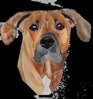 Ein Hundeportrait nach Fotovorlage von einem Dobermannmischling