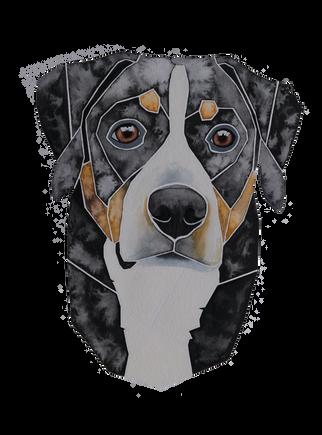 Ein Hundeportrait nach Fotovorlage von einem Großenschweizer Sennenhund