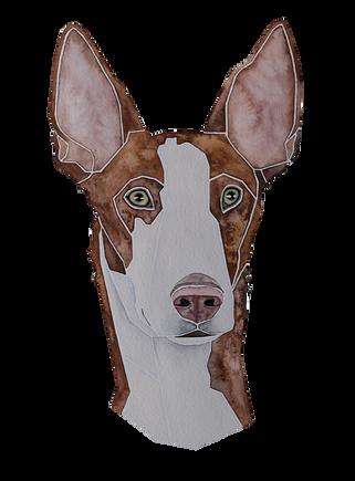 Ein Hundeportrait nach Fotovorlage von einem Podenco