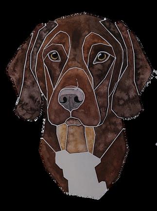 Ein Hundeportrait nach Fotovorlage von einem Viszla