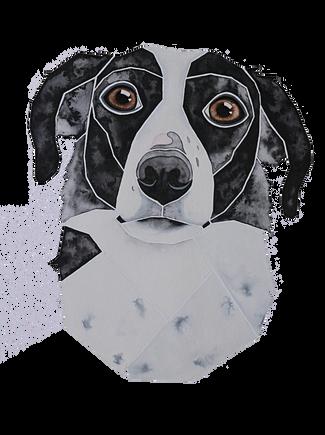 Ein Hundeportrait nach Fotovorlage von einem Border Collie