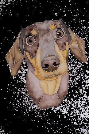 Ein Hundeportrait nach Fotovorlage von einem Dackel