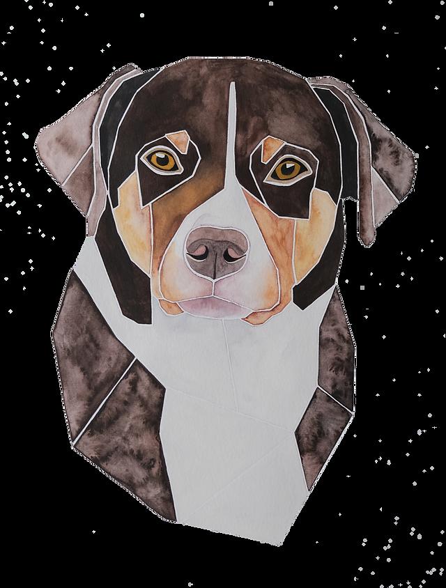 Ein Hundeportrait nach Fotovorlage von einem Appenzellersennenhund