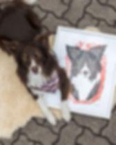 Tierportrait Pet Portrait Hundeportrait Acrylbild Hundebild, Kundenbild, Australian Shepherd