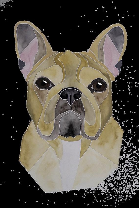 Hundeportrait nach Fotovorlage von einer Franzöischen Bulldogge