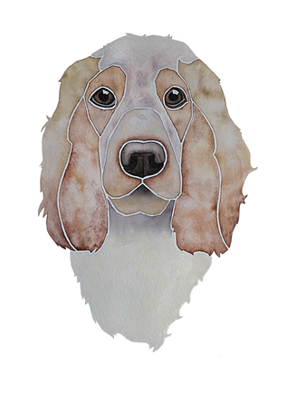 Ein Hundeportrait nach Fotovorlage von einem English Cocker Spaniel