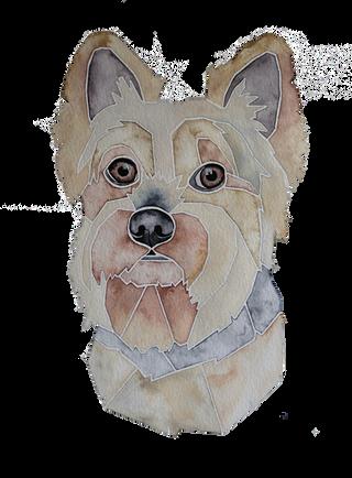 Ein Hundeportrait nach Fotovorlage von einem Yorkshire Terrier