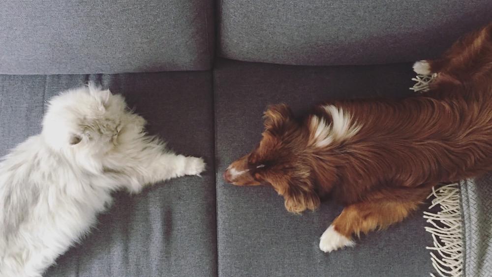 Kater und Hund
