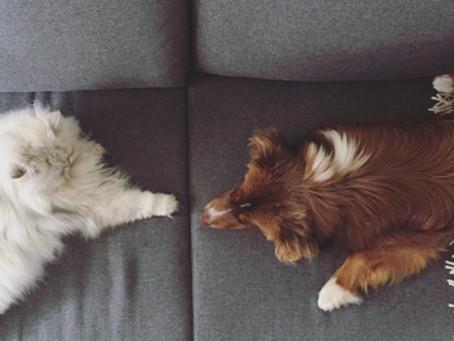 Kater trifft auf Hundewelpen