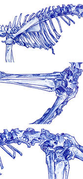 Bone Study Life Drawing