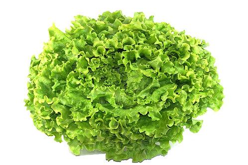 Salade Batavia pièce