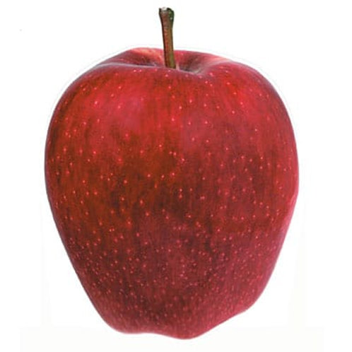Pomme Red Chief (3 pièces gros calibre)