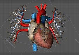 organs7 copy.jpg