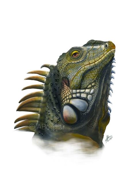 Green Iguana, Iguana