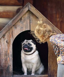 30423_pets-products_january-site-flip_4-dog-homes-crates-and-pens_tall-tile_592x721._CB286974204_