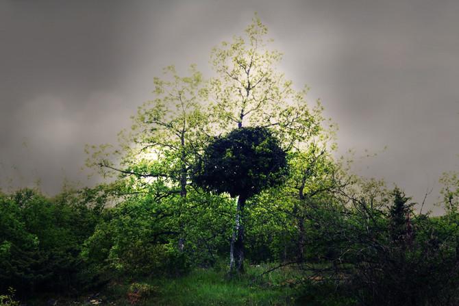 Amitié végétale