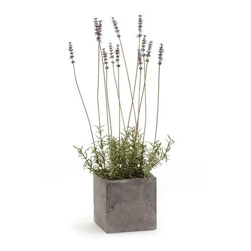 """Lavender in Square Pot 24"""""""