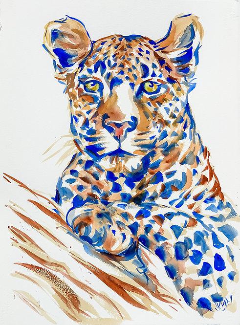 """Leopard Perch (color)"""