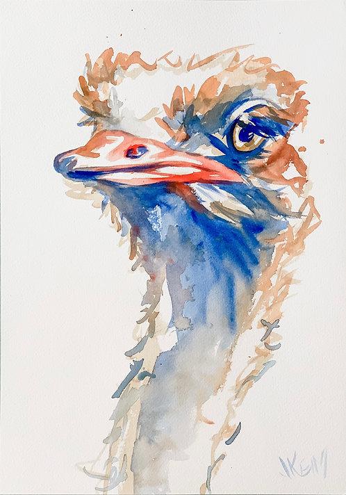 """""""Ostrich Eyes"""""""