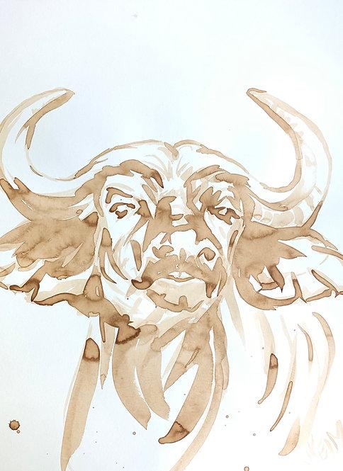 """""""Cape Buffalo Grin"""""""