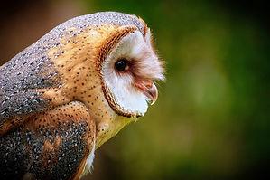 owl-3759774_960_720.jpg