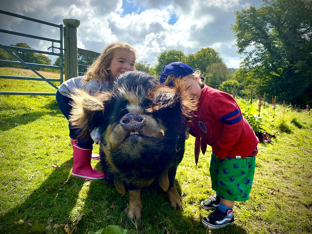 Two children hugging a Kune Kune pig at Top of the Woods Camping & Glamping, Pembrokeshire Wales.
