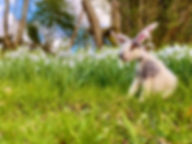 Top of the Woods Eco Camping Glamping Pembroksire Wale UK - Easter Camp Bunnies