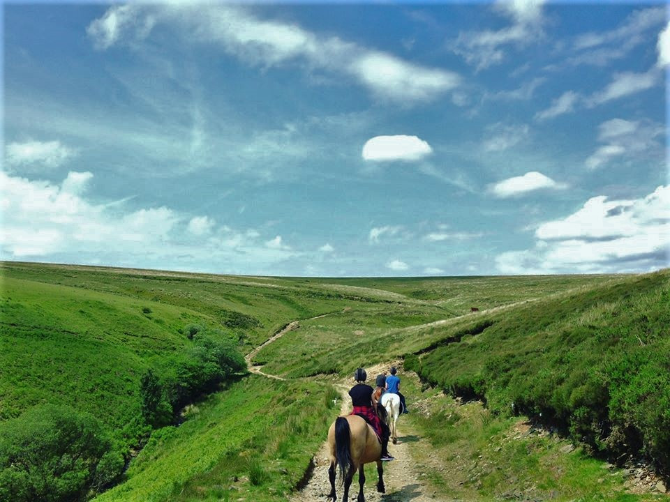 Top of the Woods Camping Glamping Eco Holiday Pembrokeshire Wales UK - Horse Riding in Pembrokeshire Coast National Park