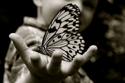 Child's Butterfly