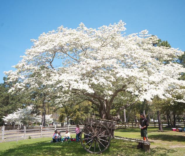 A beautiful tree in bloom.